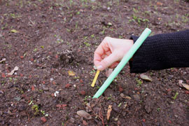 a hand dropping a strip of seed-embedded paper into a plot of soil.